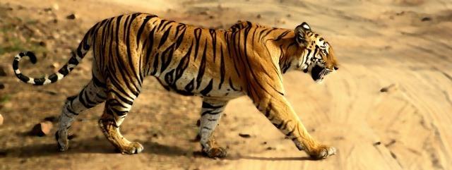 safari en inde