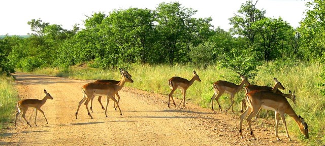 safari hors du commun